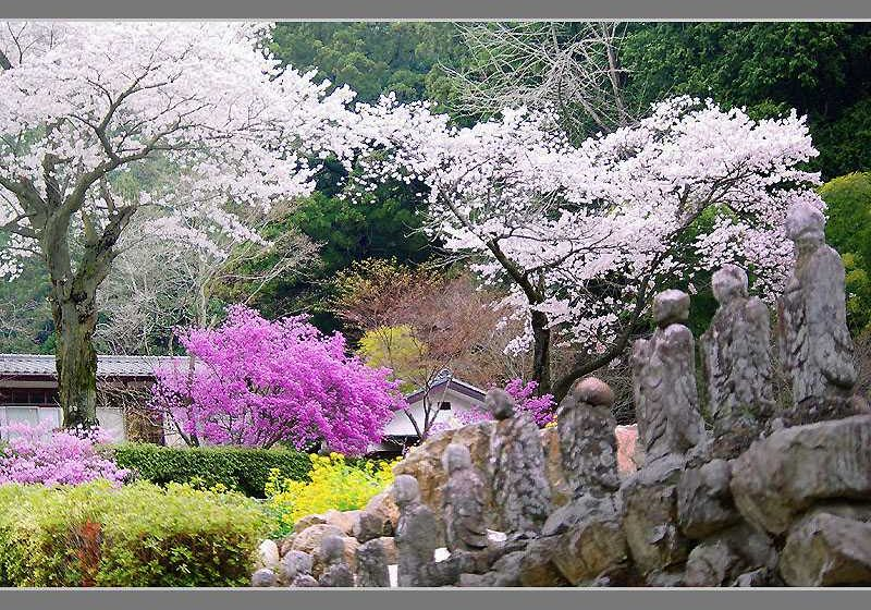 Japan - Spring in temple precincts 800x640 by kato (2367)