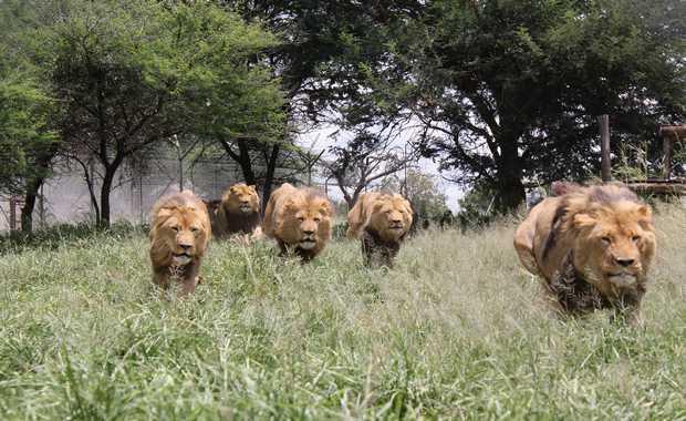 Luxury Zembabwe Journeys & Safaris