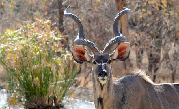 Luxury Botswana Journeys