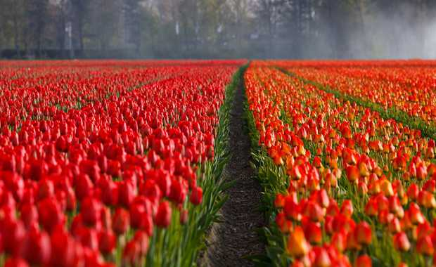 Garden & Flower Journeys