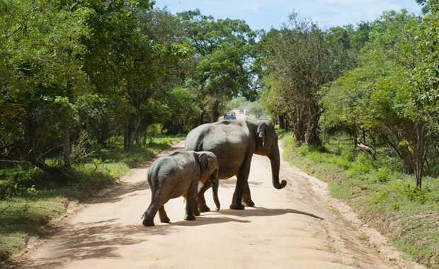 Wildlife & Photography Safaris