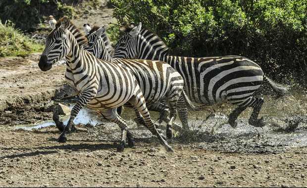 Luxury Tanzania Journeys & Safaris
