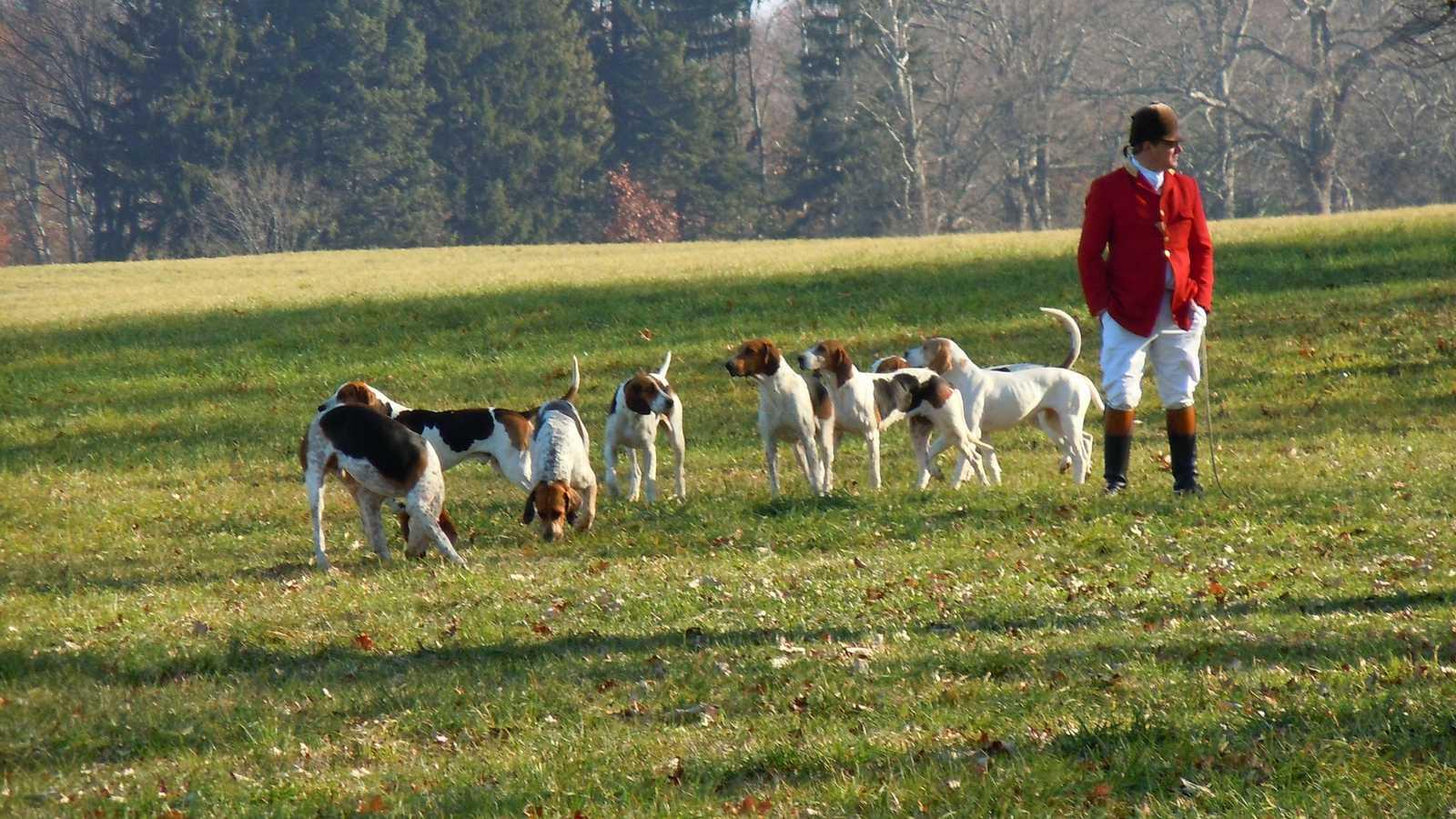vfclark-dogs-179666-1600x