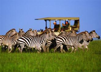 zebra[1]